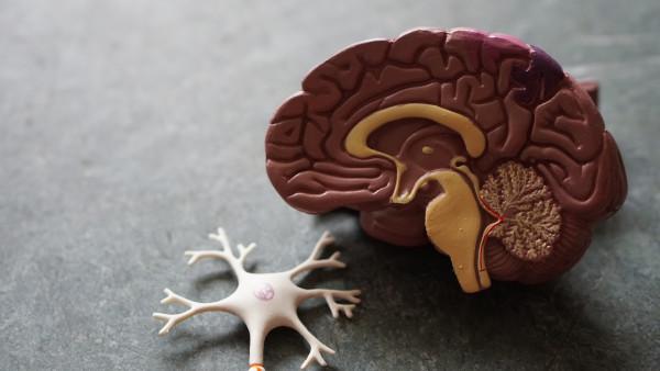 glucosa, cerebro y estudio